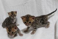 3wks1:奥手、三女ちゃん、手前左から四女ちゃん、次女ちゃん